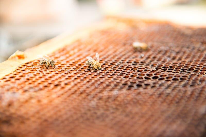 Мертвые пчелы, покрытые с пылью и лептами на пустом соте от улья в спаде стоковые изображения