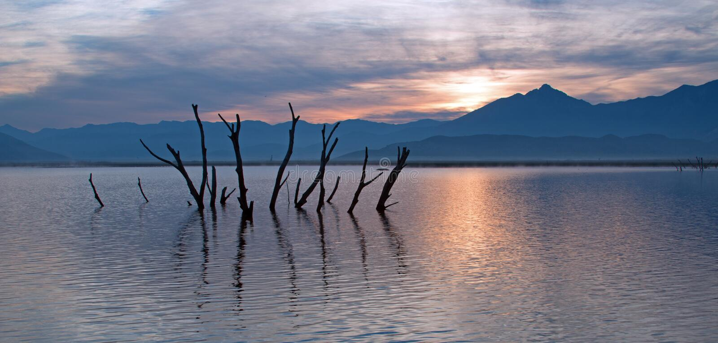 Мертвые стволы дерева и ветви засовывая из озера пораженного засухой Isabella на восходе солнца в горах сьерра-невады в центральн стоковая фотография rf