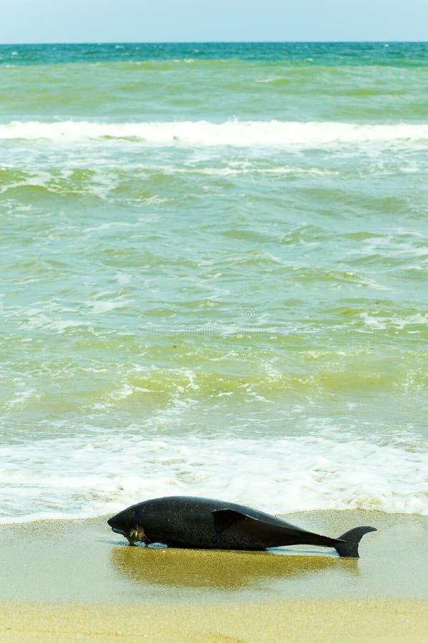 мертвый дельфин стоковое изображение rf