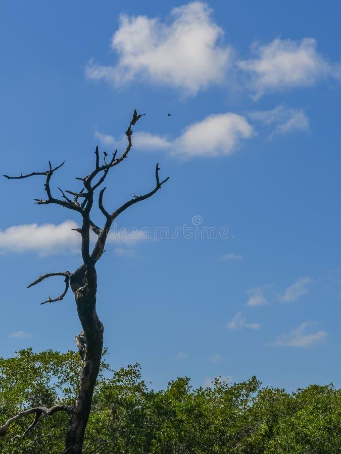 Мертвый дизайн дерева в небе стоковое фото rf