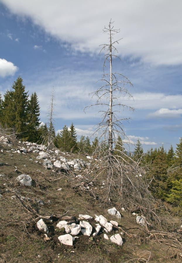 Мертвый лес в горах стоковые изображения