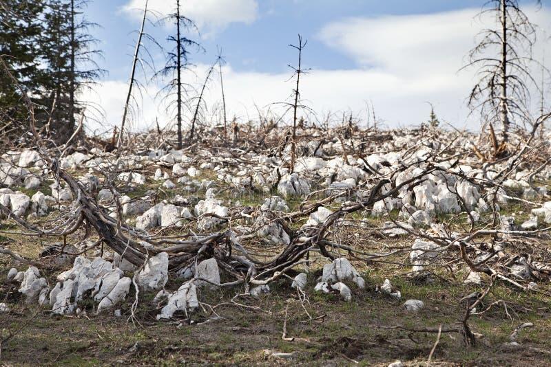 Мертвый лес в горах стоковые фото