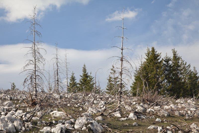 Мертвый лес в горах стоковое изображение