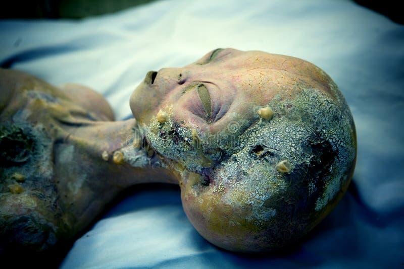 Мертвый конец-вверх чужеземца стоковое изображение rf