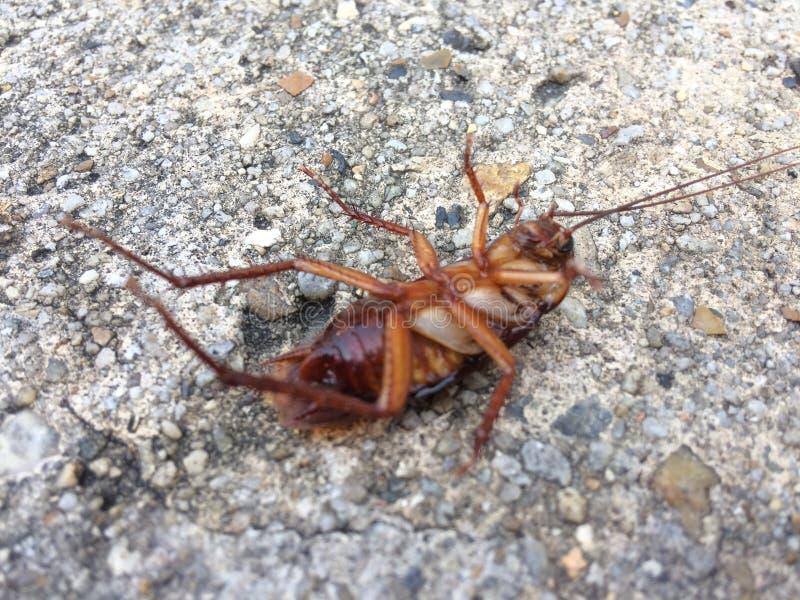 Мертвый таракан на поле после быть ударенным пестицидами стоковая фотография