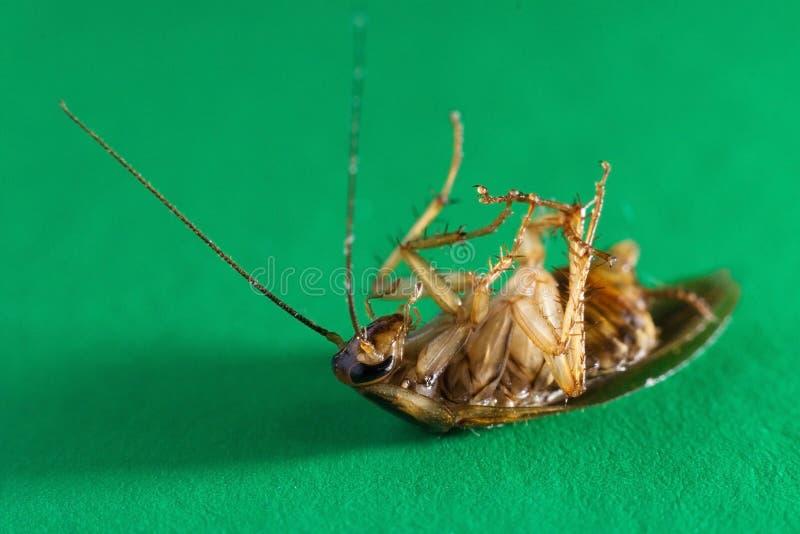 Мертвый таракан на поле стоковое фото rf