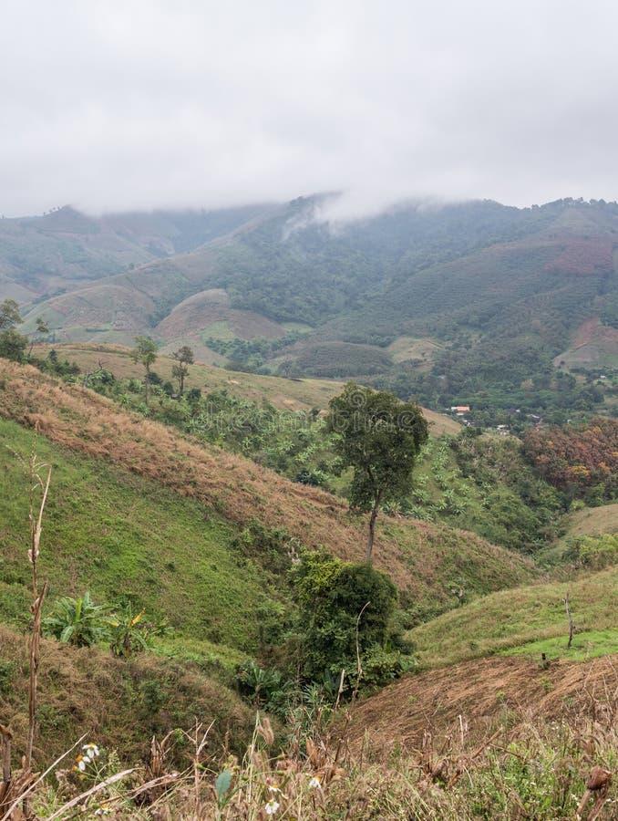 Местная ферма плантации на высокой горе стоковое изображение rf