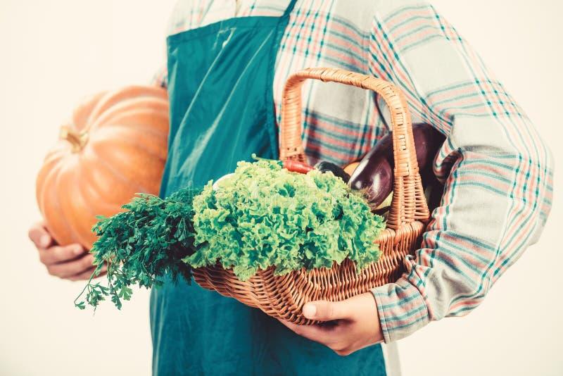Местно выращенные продукты Сельское хозяйство и сельское хозяйство Фармер носит фартук держать тыкву белый фон Концепция сельског стоковые изображения