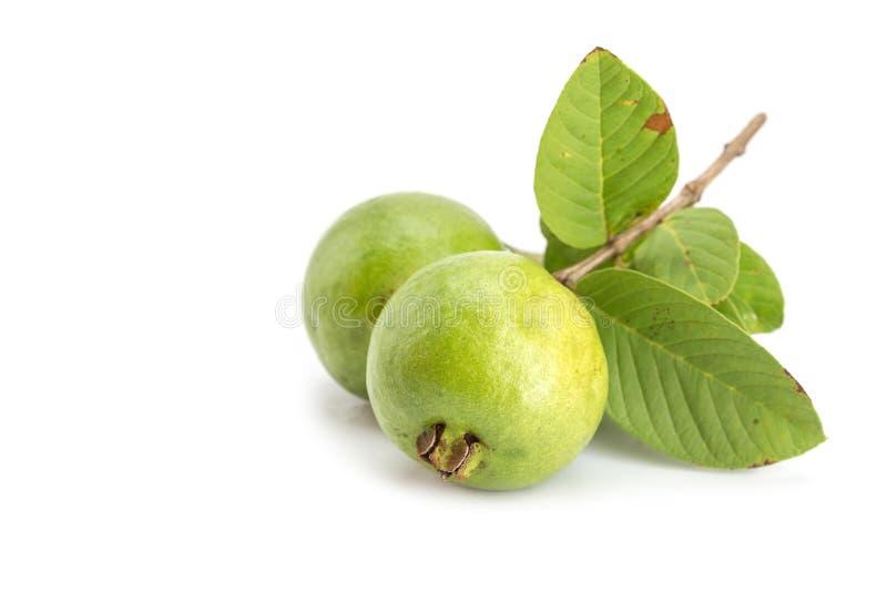 Местный тайский зеленый guava стоковое изображение rf