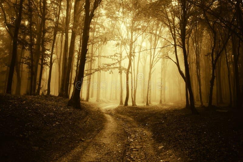 место дороги ужаса пущи золотистое стоковое фото rf