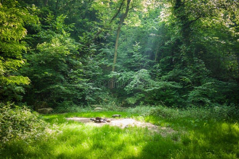Download Место леса располагаясь лагерем Стоковое Фото - изображение насчитывающей свеже, путь: 33737212
