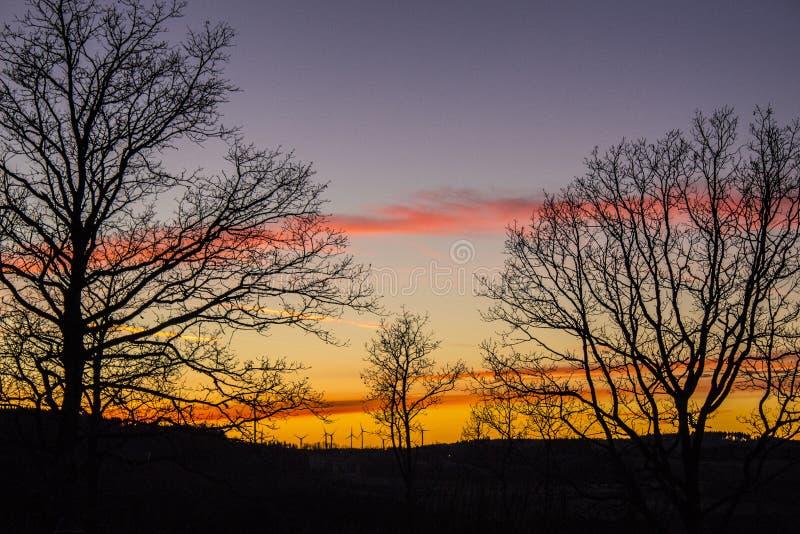 Место захода солнца с некоторыми одиночными деревьями стоковое фото