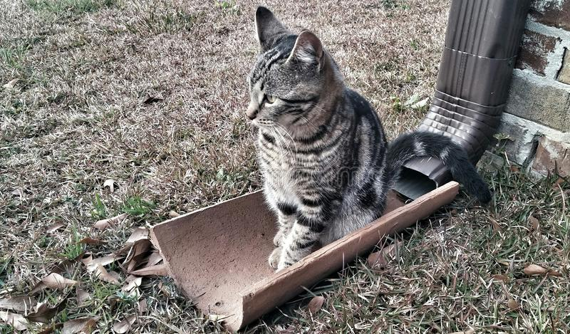 Место котенка стоковые фото