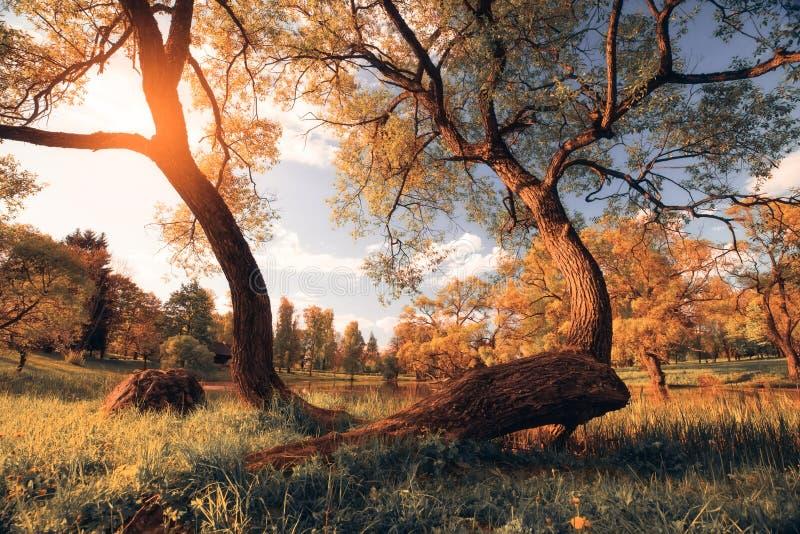 Место осени желтый цвет вала неба голубого пасмурного ландшафта поля падения сиротливый стоковая фотография