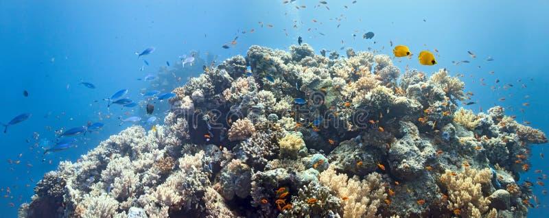 место панорамы коралла стоковая фотография