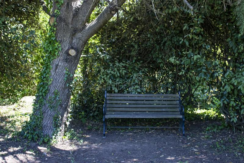 Место рядом с деревом Место тени для остатков в жаркой погоде стоковые изображения rf
