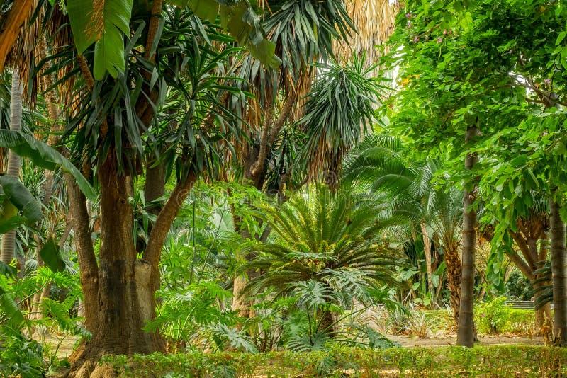 место сада тропическое стоковые фотографии rf