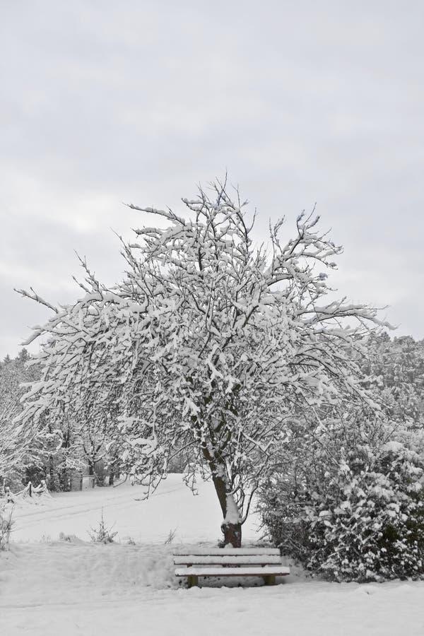 место winterly стоковые изображения rf