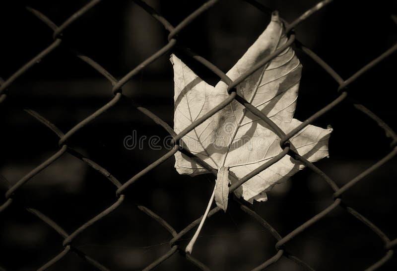 металл листьев загородки стоковые фотографии rf
