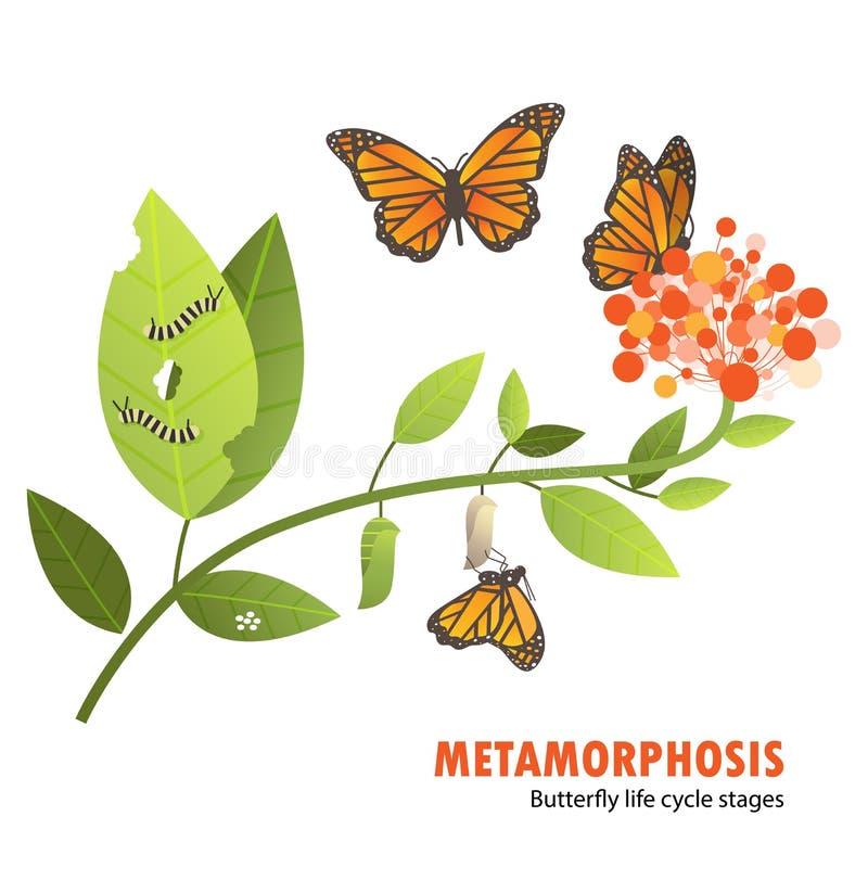 Метаморфоза жизненного цикла бабочки бесплатная иллюстрация