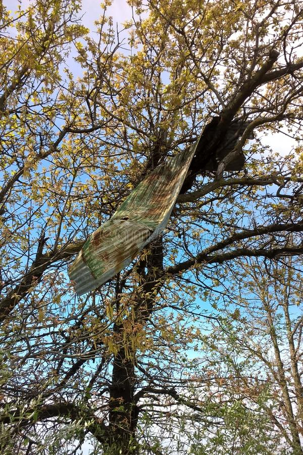 Металл в дереве стоковые фотографии rf