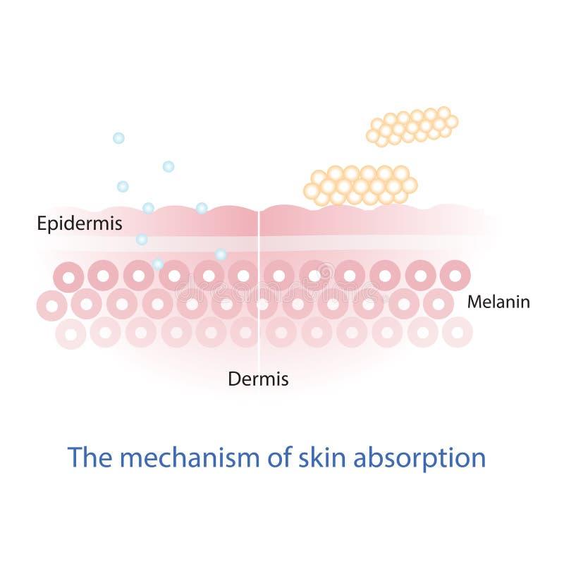 Механизм абсорбции питательного вещества через слой кожи иллюстрация вектора