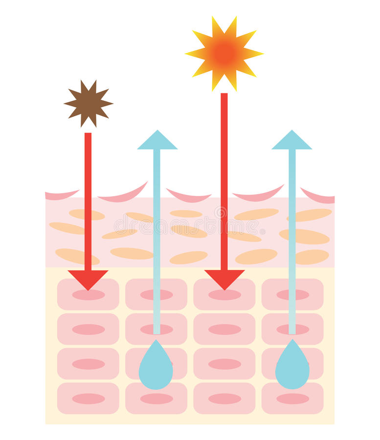 Механизм сухой кожи иллюстрация вектора
