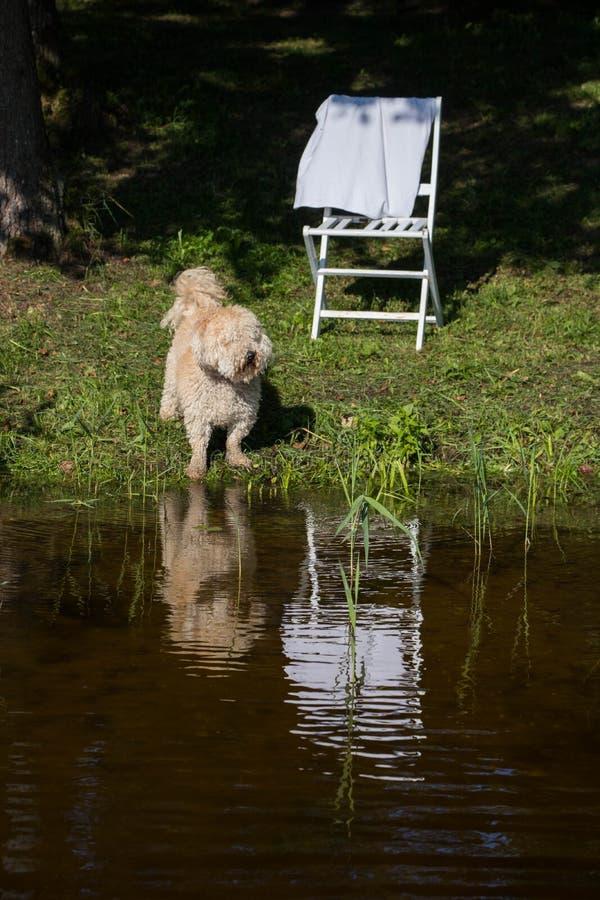 Меховая собака против голубого неба и воды и зеленого леса и тростники на suuny летнем дне стоковая фотография