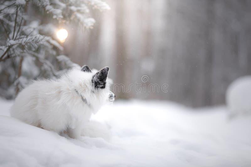 Мех белой лисы в снеге в зиме стоковое изображение