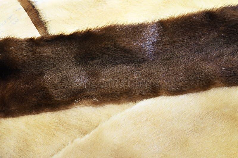 Мех норки коричневого цвета и света стоковые фотографии rf