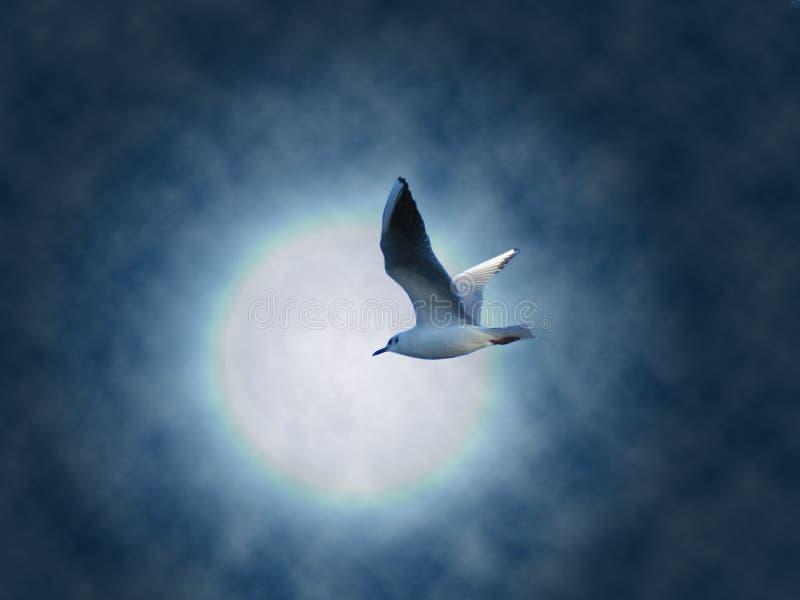 мечтайте летание стоковые фотографии rf