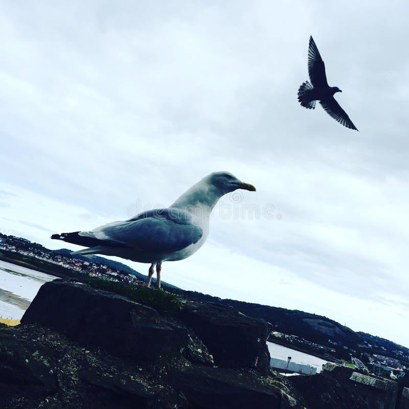 мечта птицы стоковые изображения