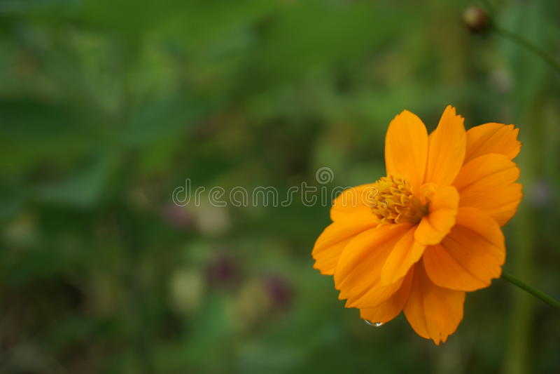 Мечта флоры стоковое изображение