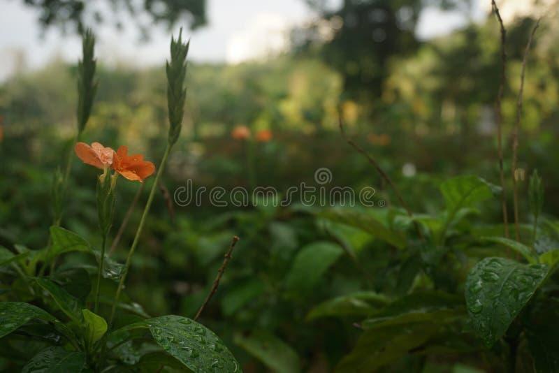 Мечта флоры стоковая фотография