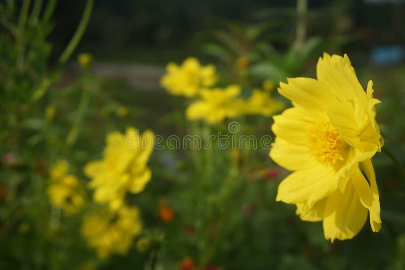 Мечта флоры стоковые фотографии rf