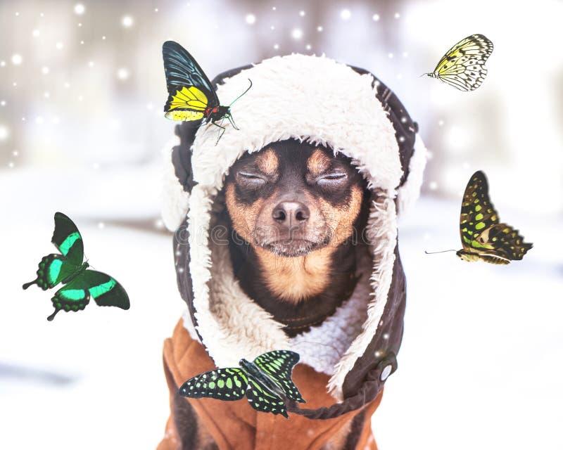 Мечты концепции приходят истинный, чудо, собака с закрытыми глазами сидит в лесе зимы и мечты лета, бабочки летают стоковое изображение