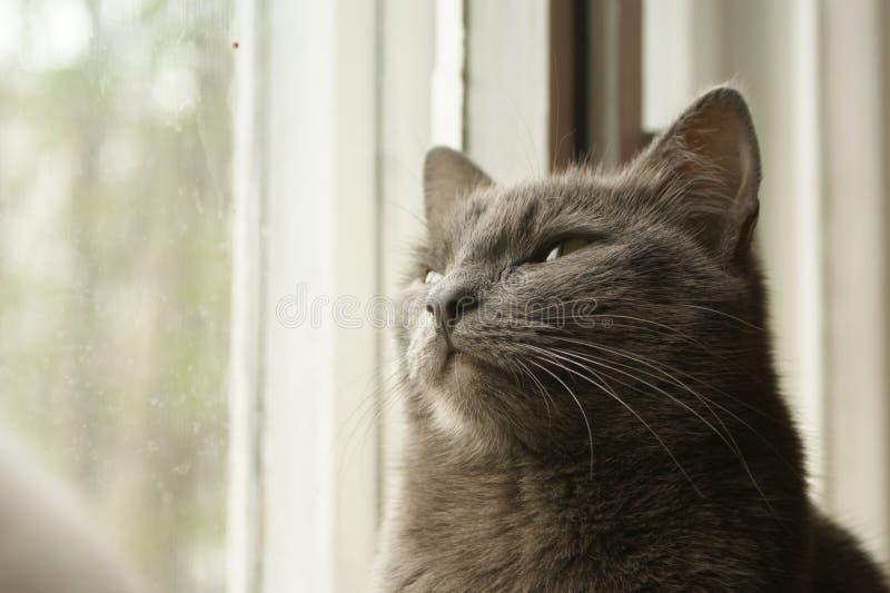 Мечты кота стоковое изображение rf