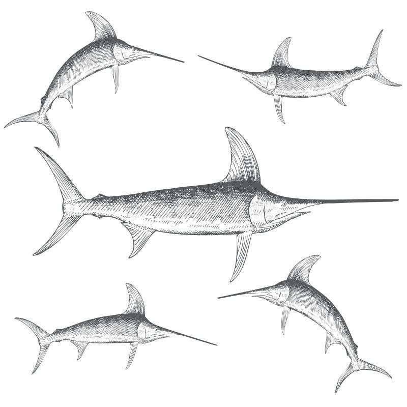 Мечы-рыб нарисованные рукой иллюстрация штока
