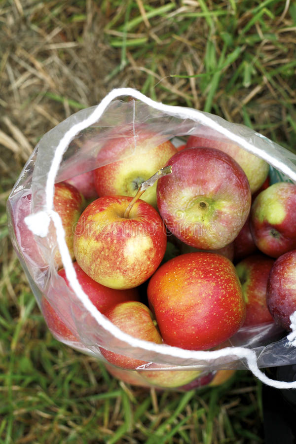 Мешок яблок стоковое изображение rf
