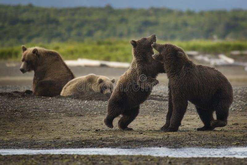 Медведь висит вне стоковое изображение rf