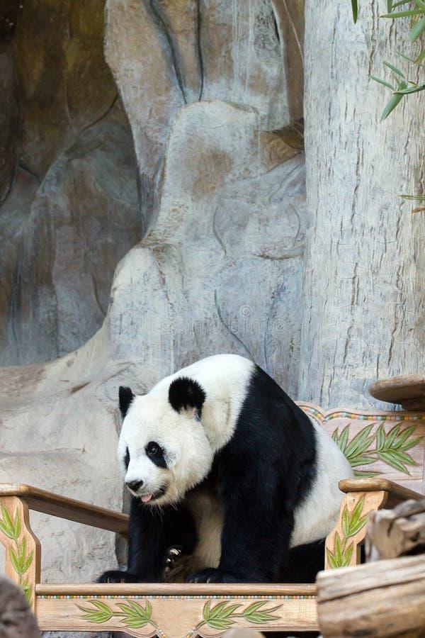 Медведь гигантской панды стоковое фото