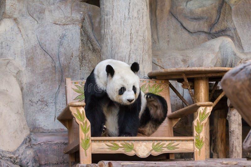 Медведь гигантской панды стоковые фотографии rf