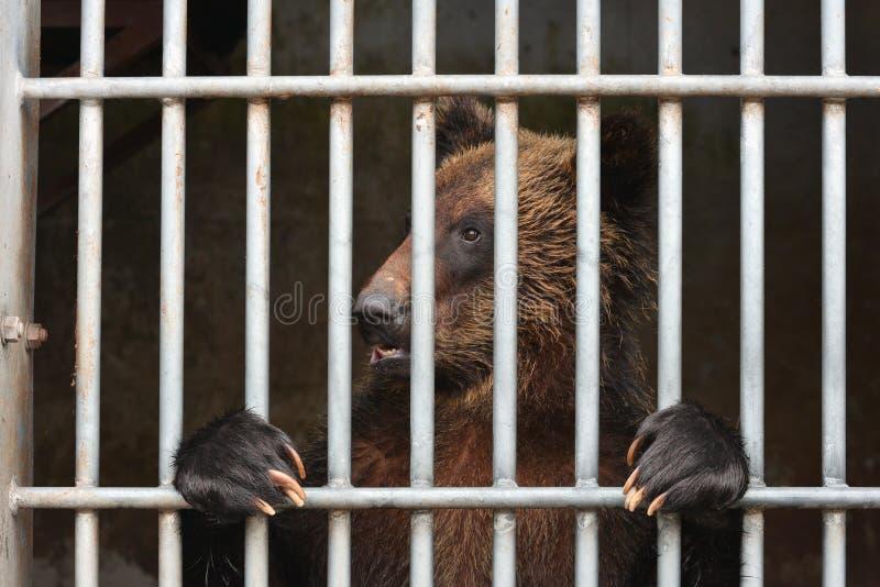 Медведь ждать некоторую еду стоковые фото