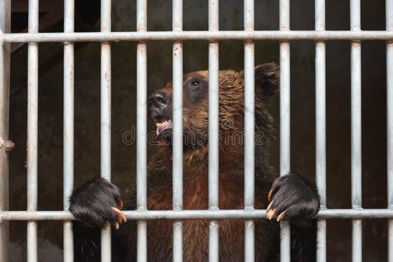 Медведь ждать некоторую еду стоковые изображения