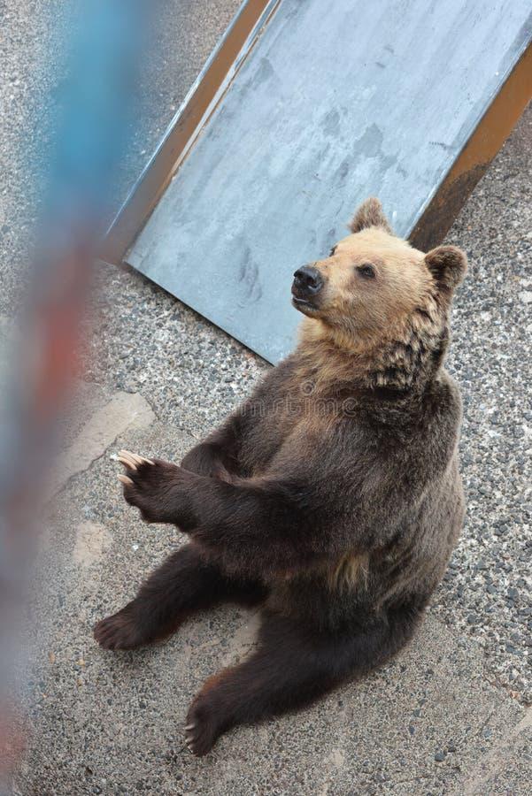 Медведь ждать некоторую еду стоковое фото