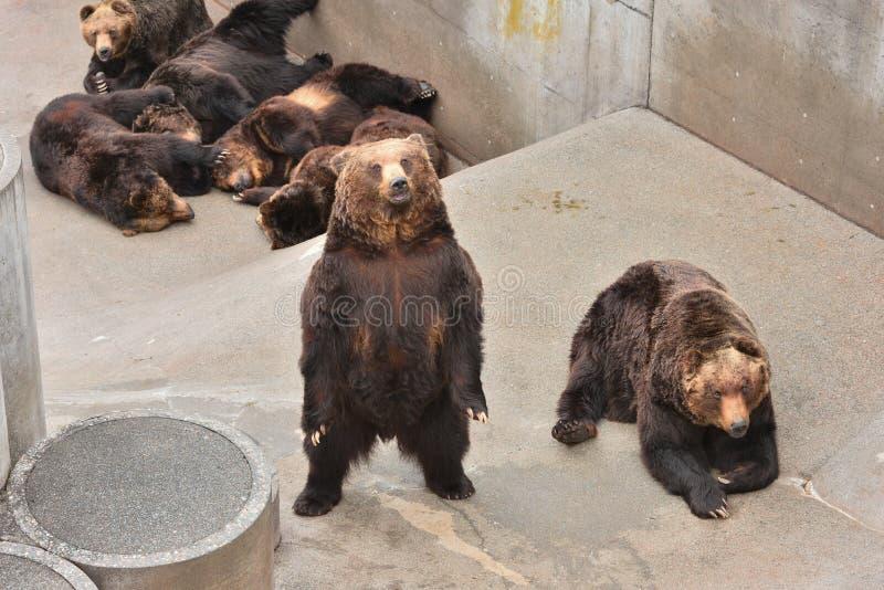 Медведь ждать некоторую еду стоковые изображения rf