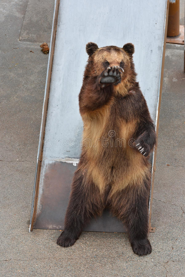 Медведь ждать некоторую еду стоковое фото rf