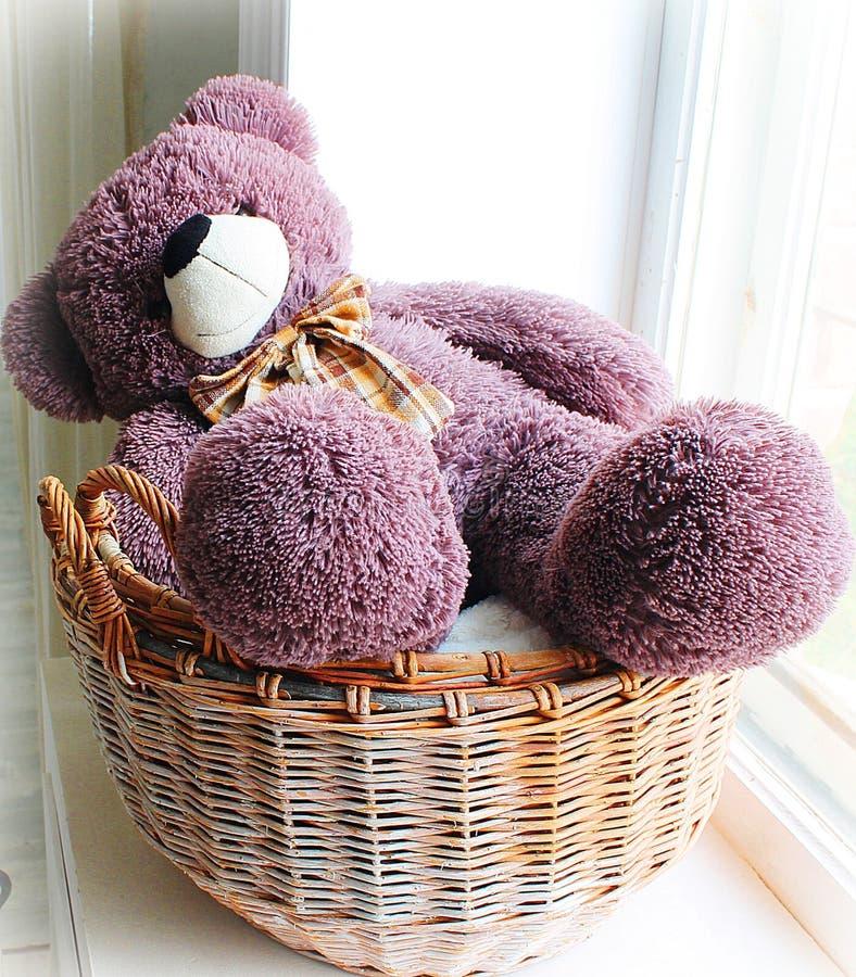 медведь милый стоковые фото