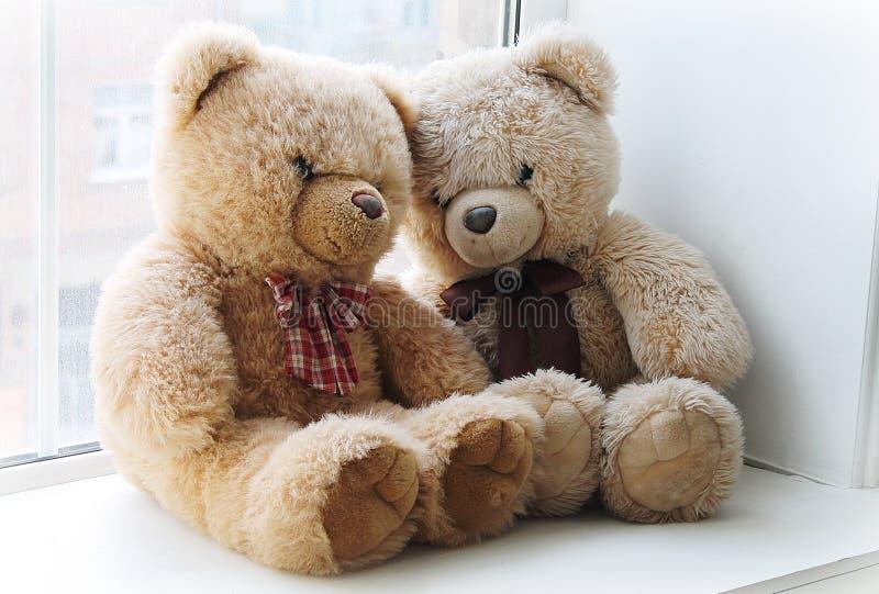 медведь милый стоковая фотография rf