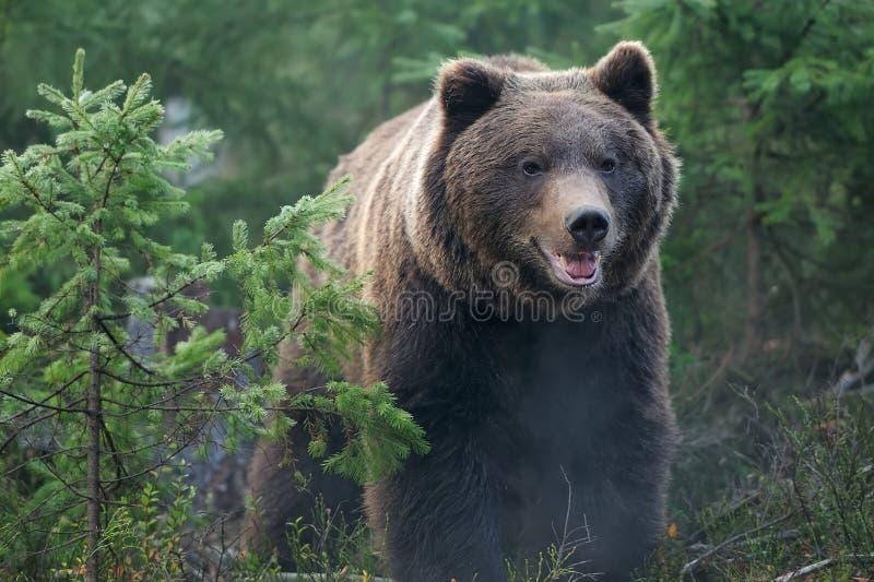 Download Медведь стоковое изображение. изображение насчитывающей одно - 34906109